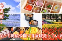 海浜公園春_サムネ